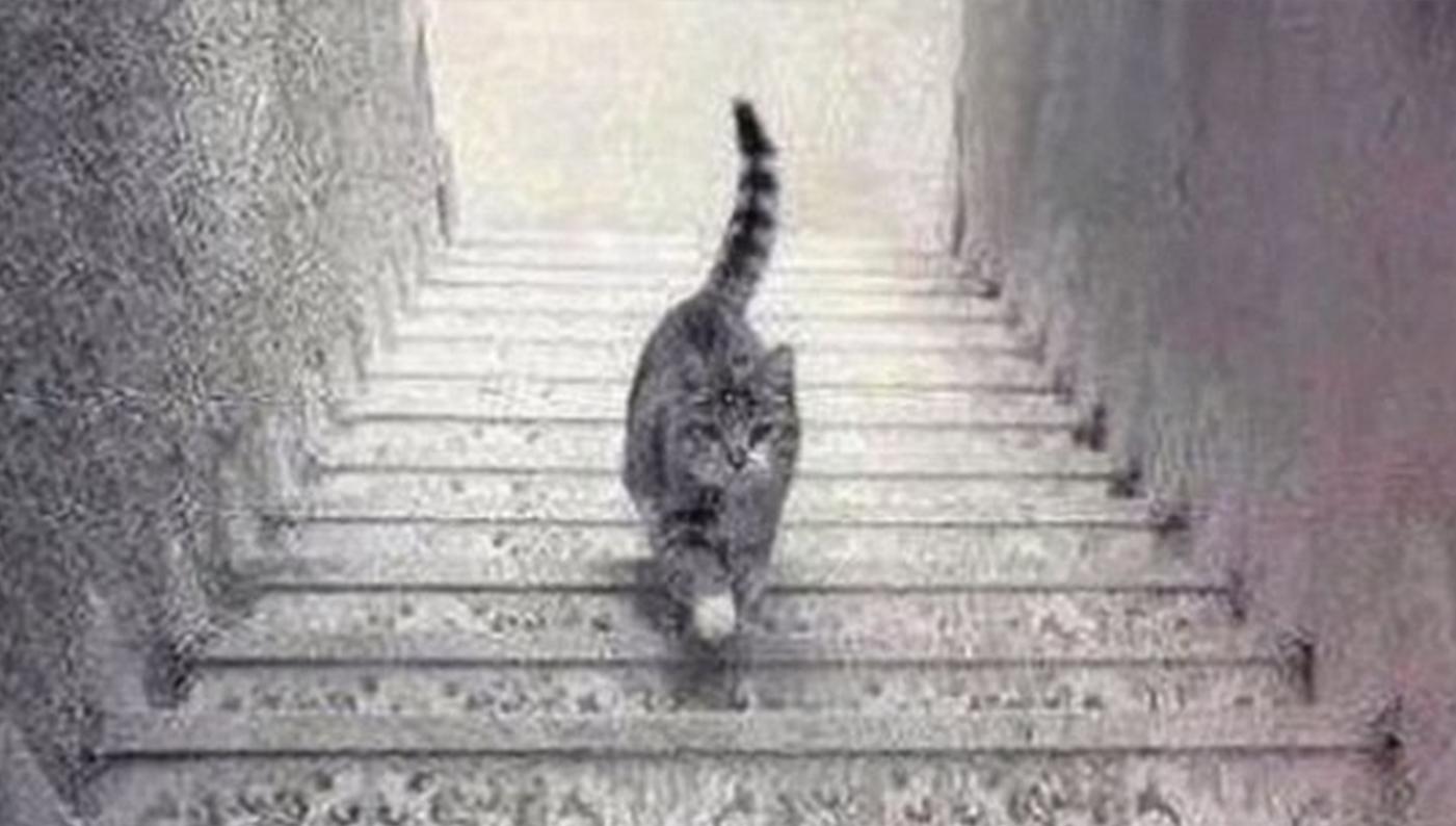 Фото девушка подымается по лестнице без 12 фотография