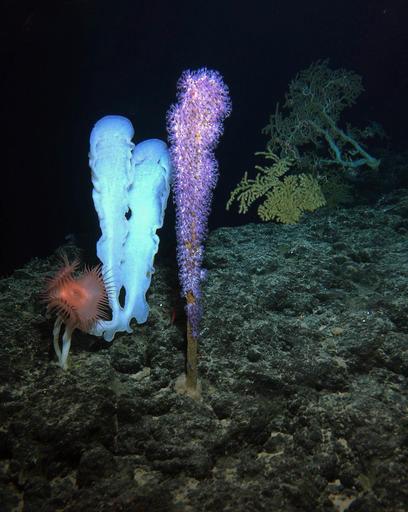 Ученые обнаружили неизвестные формы жизни надне океана