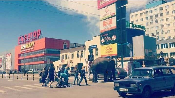 ВЧерновцах искупали слона прямо наавтомойке