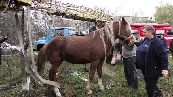 «Пленник канализации»: вЖитомире конь провалился всточную яму