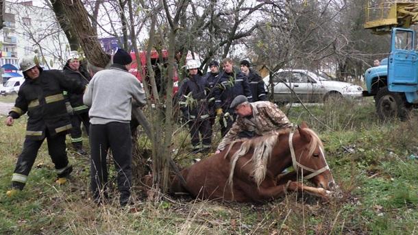 ВЖитомире cотрудники экстренных служб вытянули лошадь изколодца,