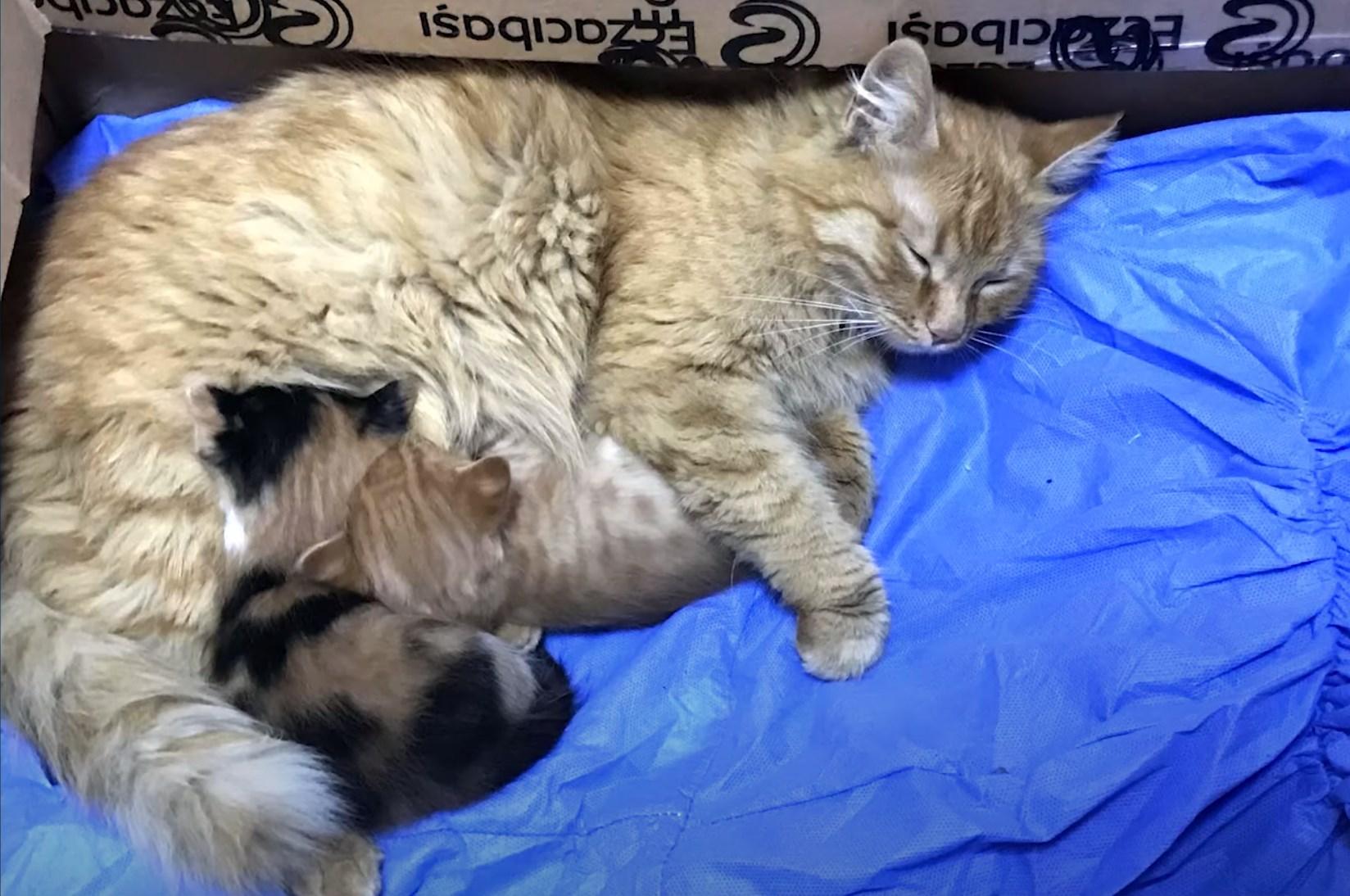 Кошка с вылеченными котятами