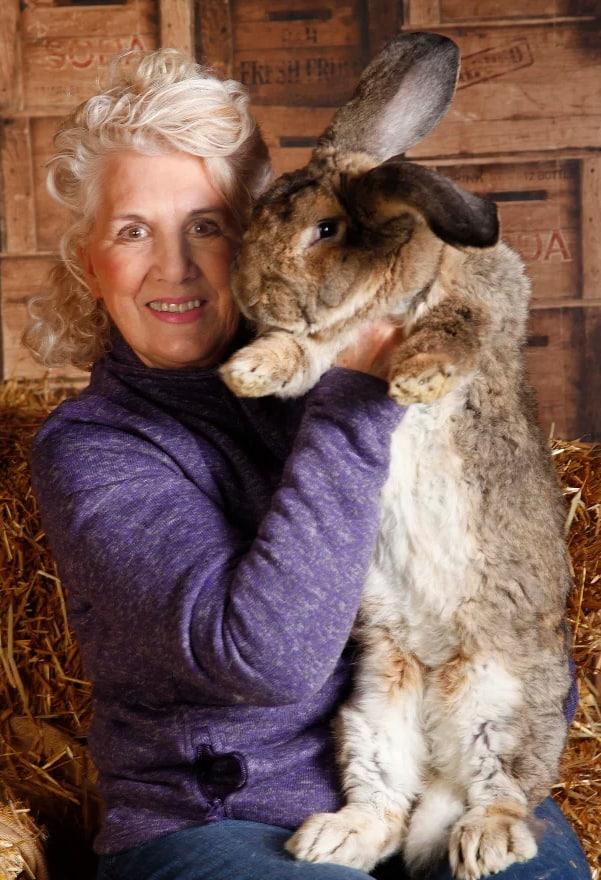 Самого большого кролика в мире украли в Великобритании