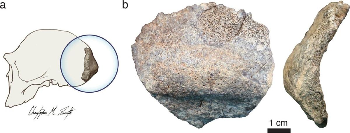 Новообнаруженным костям более 1,8 миллиона лет