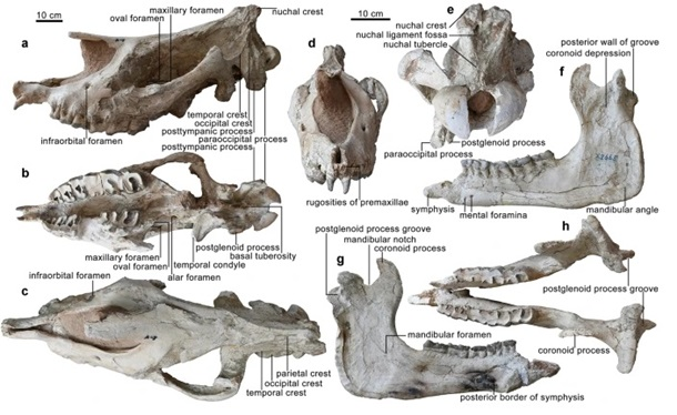 Ученые считали кости загадочными