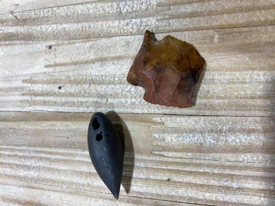 Артефакты древности в животе у аллигатора
