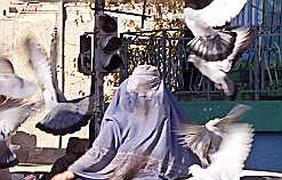 Бедные голуби