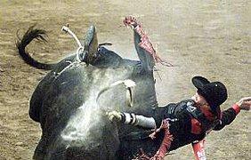 Не взял он быка за рога