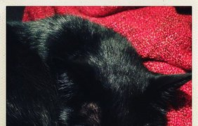 Черные коты празднуют свой день. Фото Manfredo