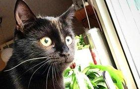 Черные коты празднуют свой день. Фото Nova
