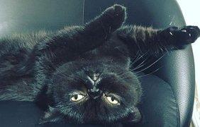 Черные коты празднуют свой день. Фото imbigstar