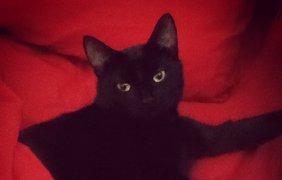 Черные коты празднуют свой день. Фото Kiera Allan