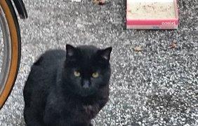 Черные коты празднуют свой день. Фото Giancarlo Chiarenza