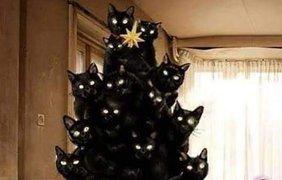 Черные коты празднуют свой день. Фото esme