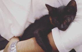 Черные коты празднуют свой день. Фото TanhTanh