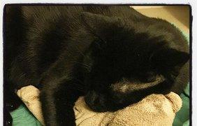 Черные коты празднуют свой день. Фото Daniel Tsao