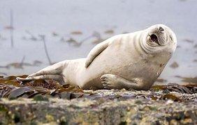 Фотографы засняли самых смешных животных