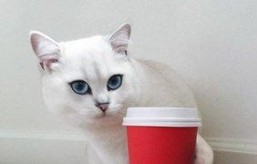 Необычный кот с огромными глазами стал звездой соцсетей. Фото из открытых источников