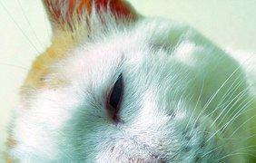 Лучшие селфи котов, собранных по всему миру