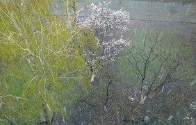 В Киеве выпал снег в апреле. Фото Любовь Сидоренко