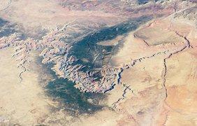 Большой Каньон в Аризоне дал приют растительности среди пустыни