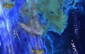 Планктон у поверхности Тихого океана отлично виден из космоса