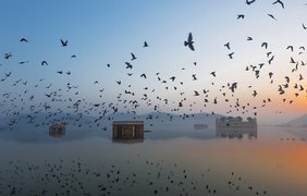 Фото: Ravikanth Kurma