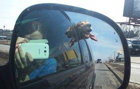 Эти собаки обожают скорость