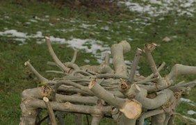 В Великобритании придумали необычный способ производства деревянной мебели - ее выращивают. фото - Full Grown