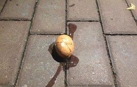 Часть яиц попала в автомобили посольства