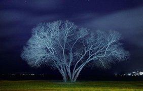 Фотограф показал жизнь одного дерева в разные времена года