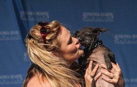 Хозяйка целует свою собаку, принимающую участие в конкурсе