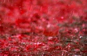 Красный (кровавый) дождь, Керала, Индия, 2001 год