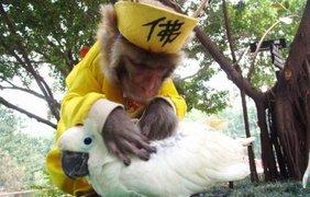 Обезьяна удаляет блох у попугая в парке диких животных, Шэньчжэнь, Китай.