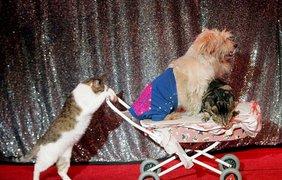 Московский театр кошки Юрия Куклачева – лучший пример необычной дружбы. Шоу в Нью-Йорке.