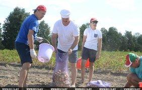 Александр Лукашенко с сыном добывает картошку