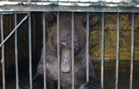 Медведь зоопарка стал заложником стихии. Twitter/pharaon01