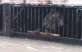 Медведь зоопарка стал заложником стихии