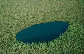 Лесное озеро. Вконтакте/vkscience