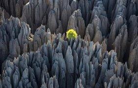 Цинги-де-Бемараха, каменный лес на Мадагаскаре. Вконтакте/vkscience