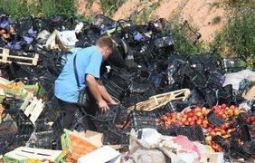 Местные жители собирают санкционные продукты