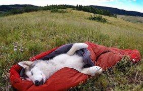 Владелец Локи берет его с собой в каждое путешествие. Фото Instagram/loki_the_wolfdog, Facebook/lokithewolfdog