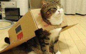 Логика кошек иногда кажется странной