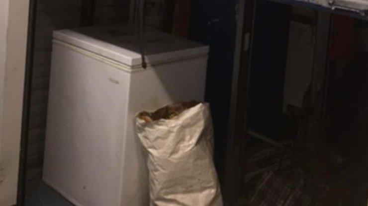 Житель америки нашел в новейшей морозилке сорок замороженных кошек