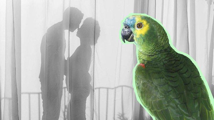 ВКувейте попугай поведал жене обизмене супруга
