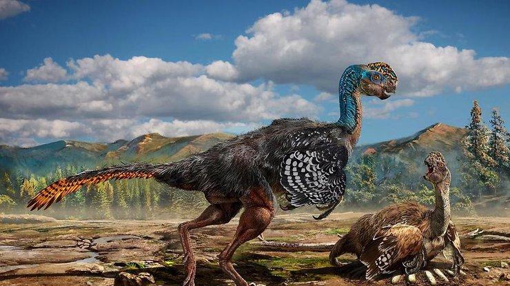 В «Поднебесной» отыскали останки неизвестного вида динозавров 3