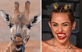 Животных сравнили со знаменитостями (фото: Ivona)