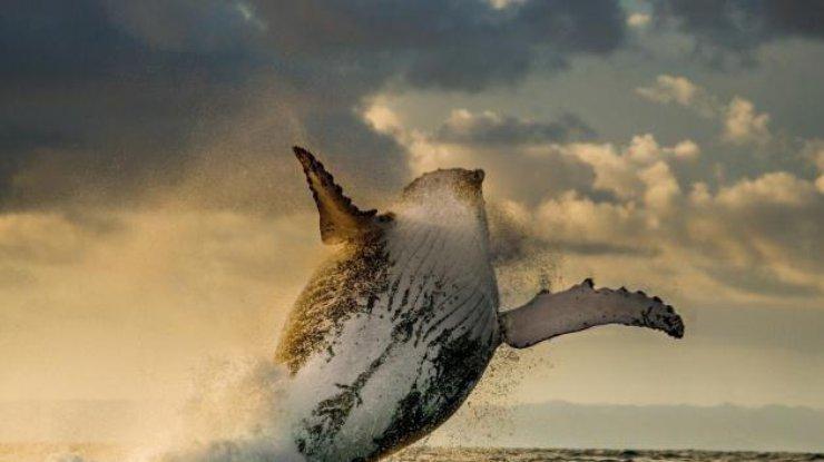 Ученые поняли, зачем киты выпрыгивают изводы