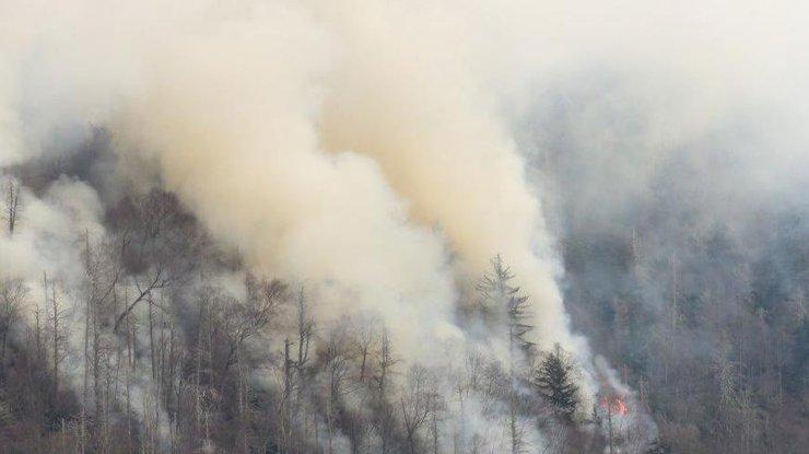 ВТеннеси полыхает Национальный лесопарк. Тысячи людей эвакуированы