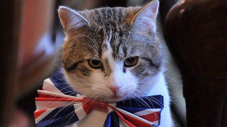 Наработу в английское руководство приняли 2-х кошек